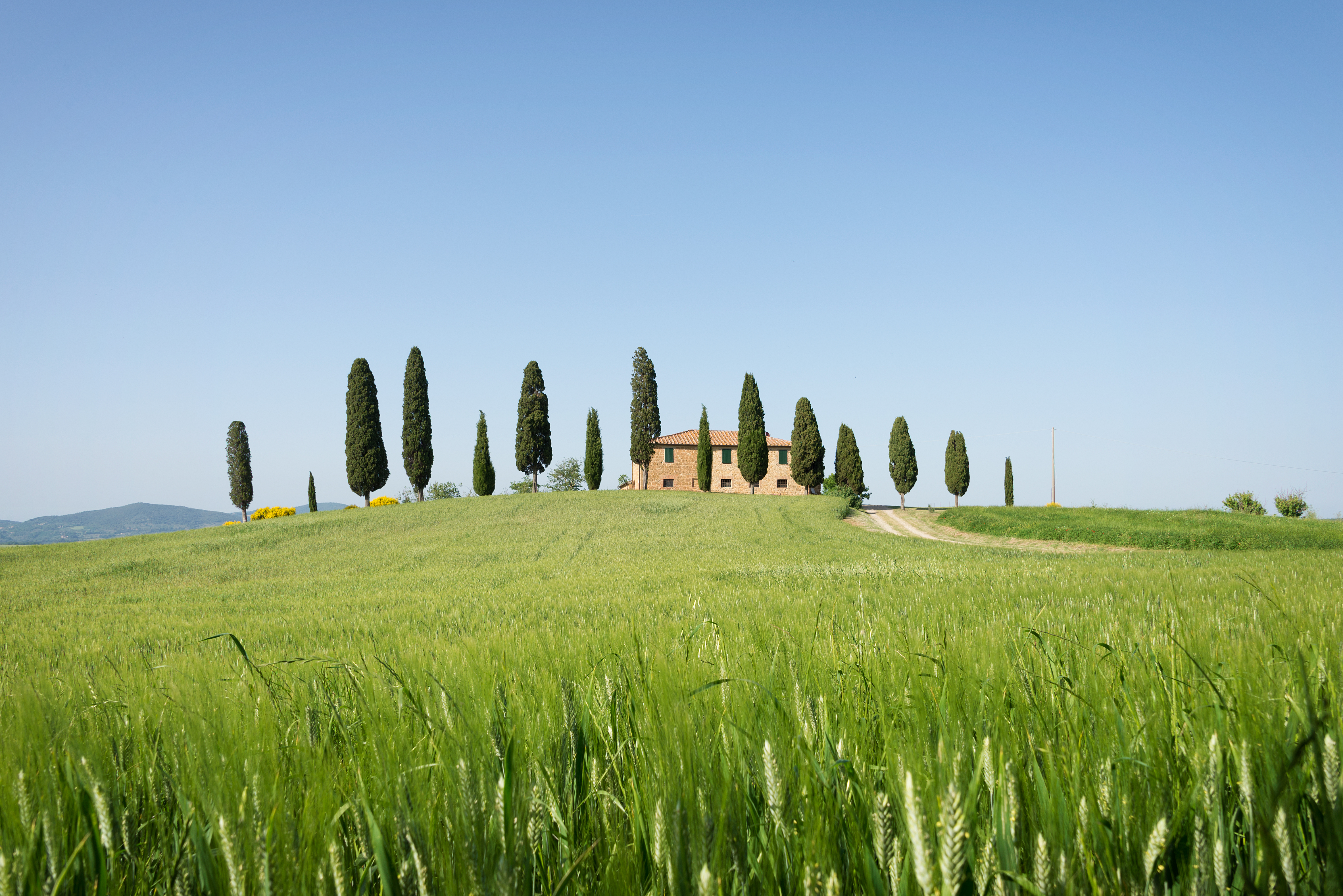 farmhouse-with-cypress-trees-in-tuscany-P3W4EG9